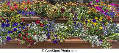 Basket of Flowers - Flower basket at Vail Colorado