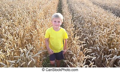 little boy playing in wheat field - cute little boy playing...