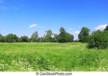 Beautiful field landscape