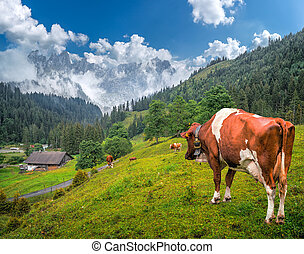 montagna, impressionante, cime, svizzera, mucche, pascolo,...
