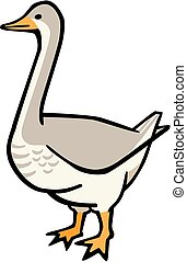 Gander - Illustration of a goose with gray bars on the chest...