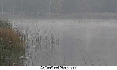 Dense fog on lake water surrounded by bulrush reed plants in...