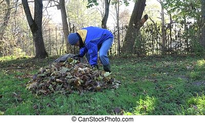 Male worker guy fill big bag with colorful dry leaves and carry away. 4K
