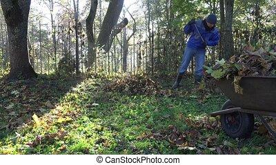 worker man in blue jacket rake fallen leaves and barrow...