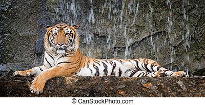 Tiger sit in deep wild