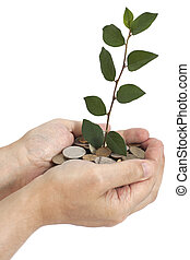 hand holding tree growing on coins .saving money - hand...