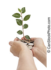 hand holding tree growing on coins saving money