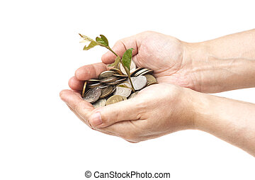 hand holding tree growing on coins isolated.saving money