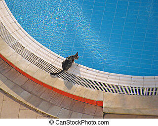 Cat at pool - Cat on the edge of swimming pool