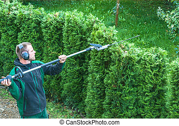 Hedges cutting - Hedge trimming, works in a garden....