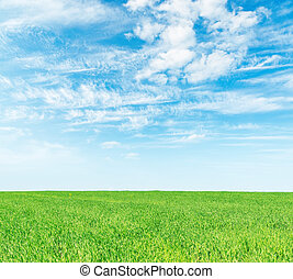 green grass field and white clouds in blue sky