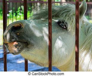 Shetland pony portraits in summer. - Shetland pony portraits...