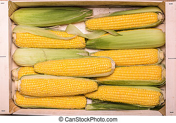 Ears of Corn in Crate