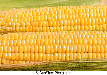 Ear of Corn Closeup