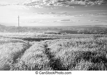 Landscape with endless field black and white