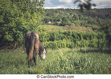 Horse on the green meadow horizontal