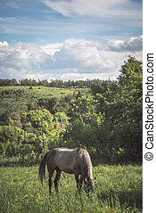 Horse on the green meadow