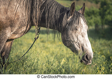 Grey horse in the green field