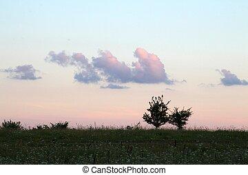 Gemini trees in sunset