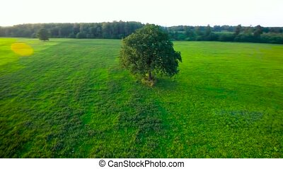 tree in the meadows - tree in the green meadows aerial view
