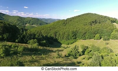 Aerial view of forest, grassland, summer day.