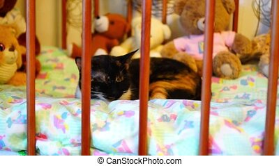 Cat sleeps in crib - Cat sleeps in kids crib