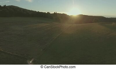 Aerial view of forest and green grassland at sunset. -...