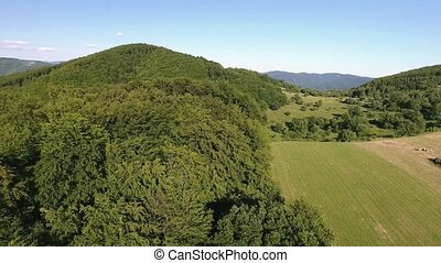 Aerial view of forest, grassland and houses, summer day. -...