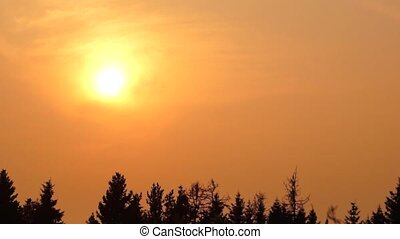 Golden hot sunset pan - Golden sunset over spruce forest in...
