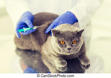 close up of vet making vaccine to cat at clinic - medicine,...