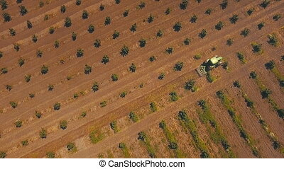 tractor work the land on the plantation of hazelnut