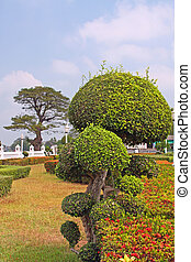 Manicured garden shrub - Trimmed bush in a formal garden