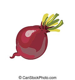Red beetroot whole isolated on white background. Vector...