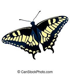Papilio machaon butterfly vector illustration