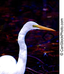 Great Egret Profile - This Great Egret is sometimes know as...
