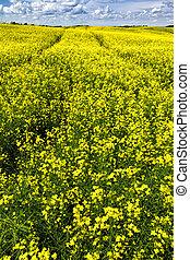 tracks in flowering canola field