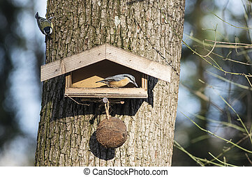 Nuthatch on a birdfeeder - Birdfeeder and nuthatch