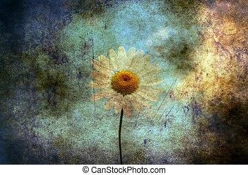 Camomile on a field grunge concept