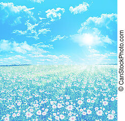 Chamomile field. Summer landscape with colorful flowers daisies.