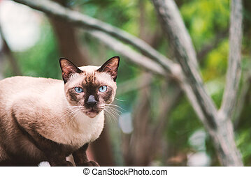 Animal vintage Cute cat in nature place .