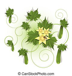 cucumber - Illustration, green cucumber on branch on white...