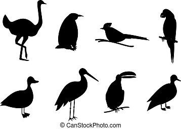 silhouette birds vector set