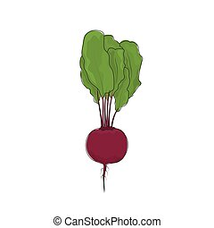 Beet Root Vegetable on White Background - Beetroot Standing,...
