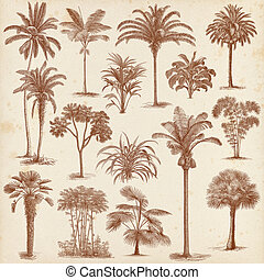 Vintage hand drawn palm trees set - Big set of vintage hand...