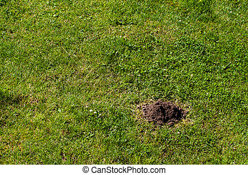 Molehill on grass lawn, many copy space on your project.