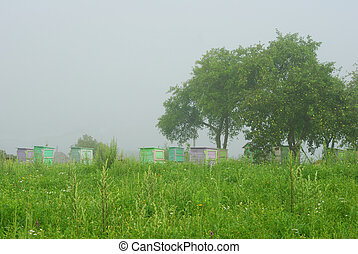 Foggy morning in apple orchard with beehives