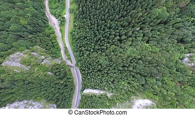 Road in coniferous forest, little stream. Mala Fatra,...