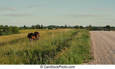 Horses in Green Field near rural road.