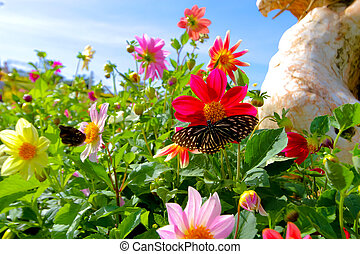 Flowers with butterfly in the garden