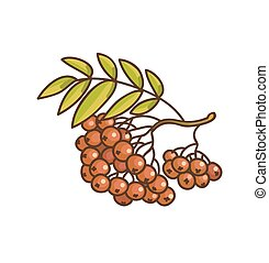 Red rowan cartoon drawing. Vector Illustration.